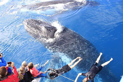 Floating above whales IMG_4466.JPG