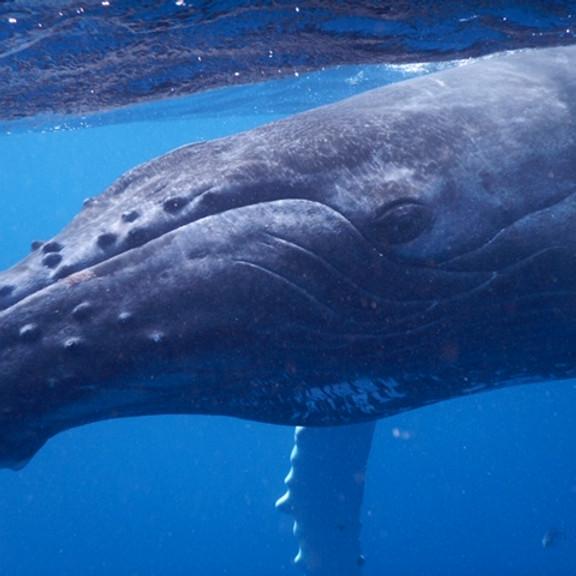 Hervey Bay Sacred Whale Retreat (Week 2)