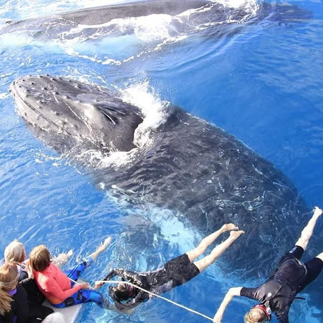 SOLD OUT Hervey Bay Sacred Whale Retreat (Week 1)