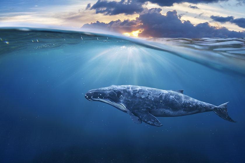 whale in half air.jpg