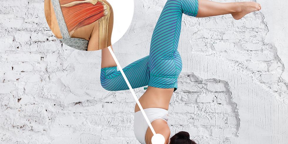 Yoga Omuz Anatomisi