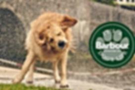 barbour dog banner.jpg
