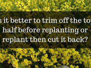 Ask a Gardener - Trimming