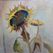 Subtle Sunflowers' Victoria Broxton Oil on Linen board 30x30cm £650