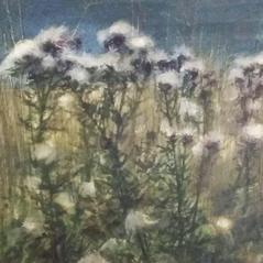 'Thistledown at Dusk' David E Johnstone Watercolour 25 x 19cm