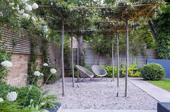 Roof-trained trees set into gravel