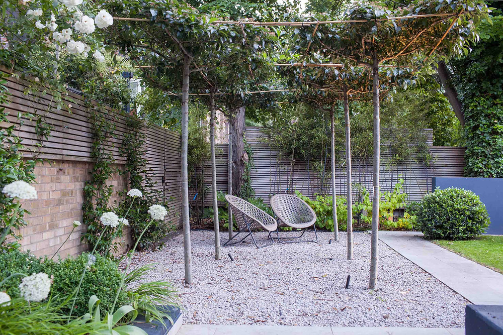 Tabletop trees in gravel by Simon Orchard Garden Design
