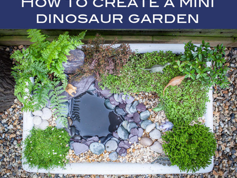 How to create a mini dinosaur garden