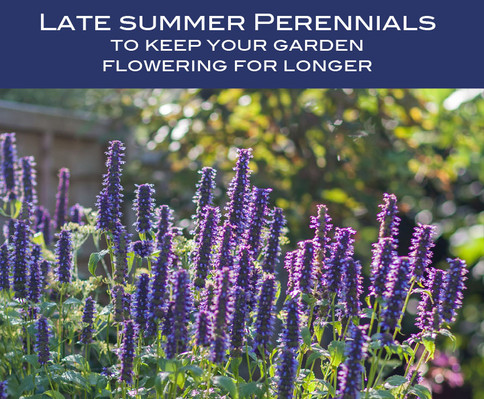 Late summer perennials to keep your garden flowering for longer
