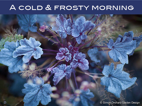On a cold & frosty morning...