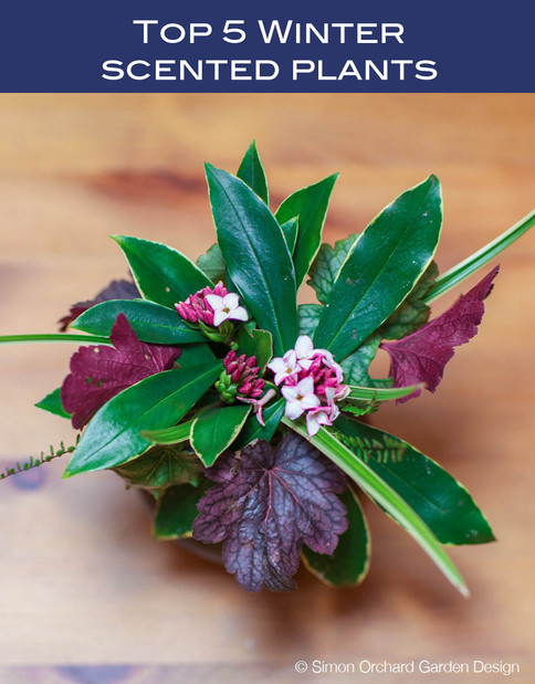 Top 5 plants for winter scent