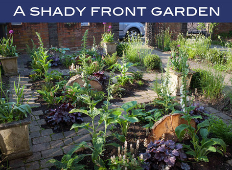 A shady front garden
