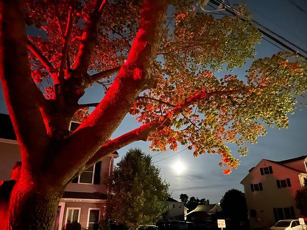 Spring Moon Rising (2021).jpg