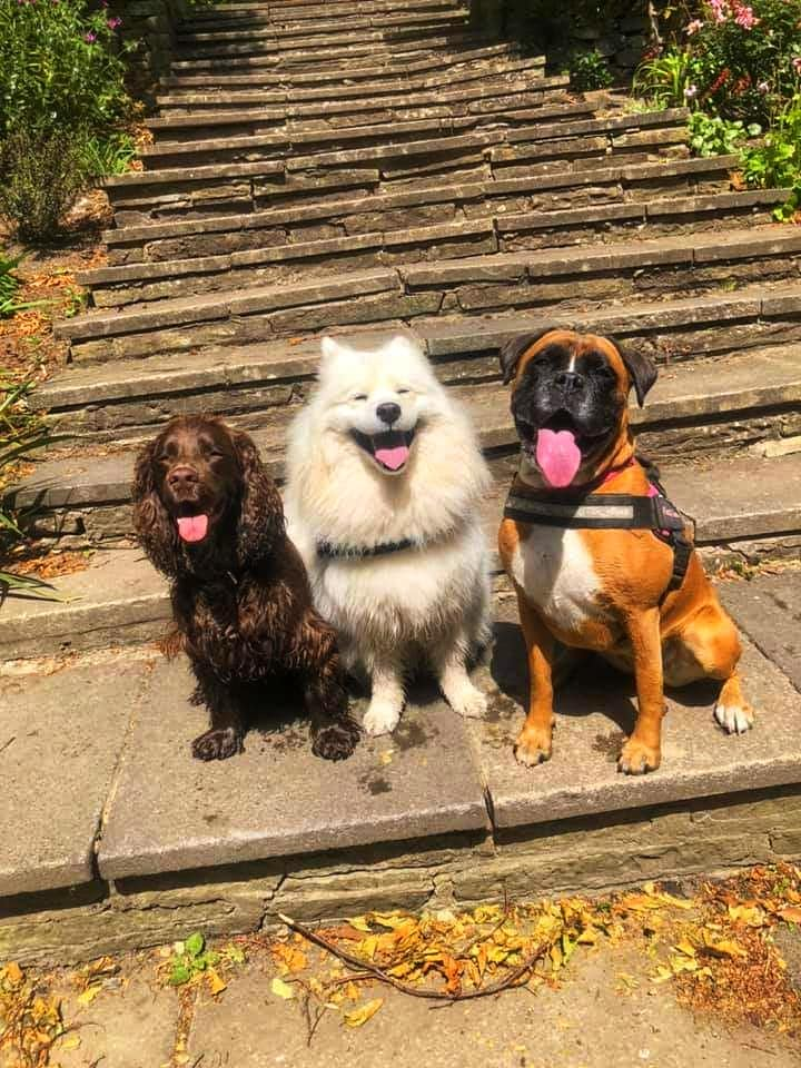 mezzy, millie and ollie on steps.jpg
