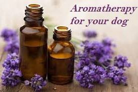 Aromatherapy for your dog?