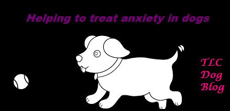 Helping to treat anxiety and fear in dogs.