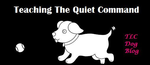 TLC Dog Blog