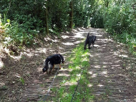 Some dog walks around Calderdale and Brighouse