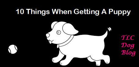 10 things when getting a puppy