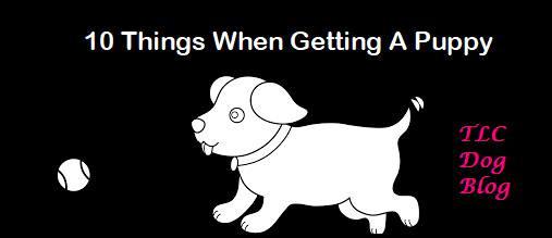 TLC Dog Blog 10 things Puppy