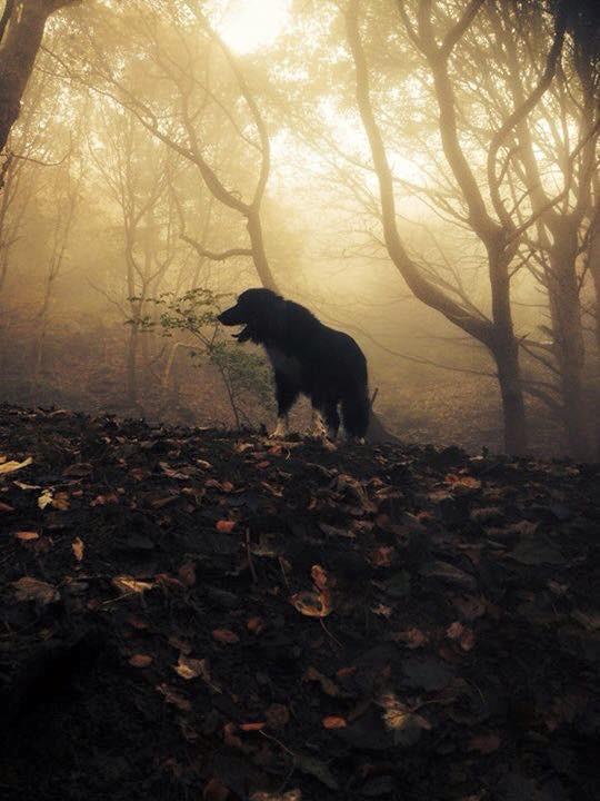 Adopting a rescue dog