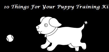 10 Things For Your Basic Command Puppy Training Kit.