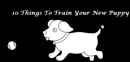10 Things to Train Your New Puppy