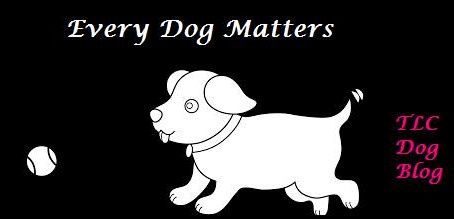 Every Dog Matters