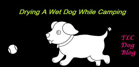 How to dry a wet dog while camping