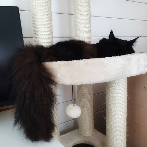 The tail again