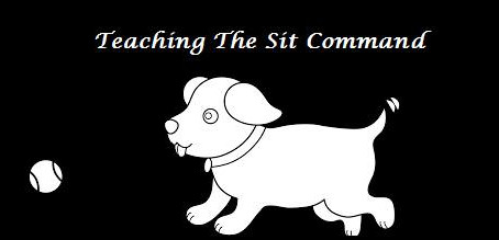 Teaching the Sit Command