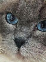 Blossom's eyes
