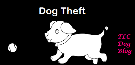 Are dog thefts still on the rise? And how do you protect your dog?