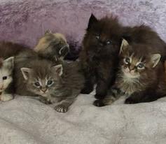 Mortimer and his siblings