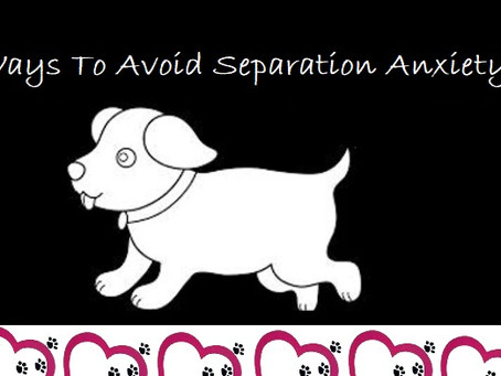 10 Ways To Prevent Separation Anxiety In Your Dog