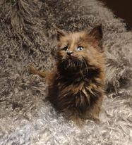 Mortimer at 6 weeks