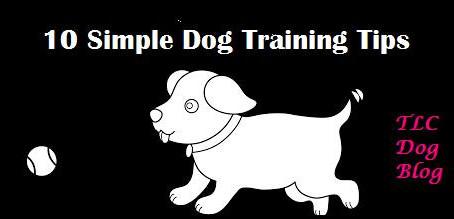 10 Simple Dog Training Tips