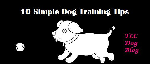 10 Simple Dog Training Tips