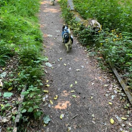 Plodding the paths