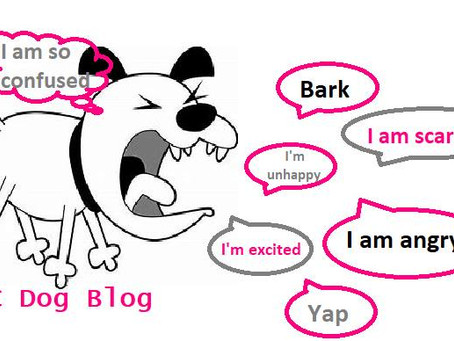 Is your dog driving you barking mad?
