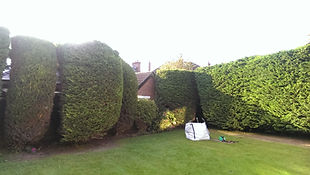 Garden Maintenance, Hedge Cutting, Tree Pruning Coleraine, Portrush, Portstewart, Limavady, Ballymoney