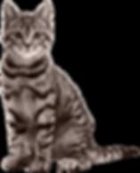 cat_PNG50514.png