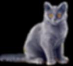 Cat-Gray-PNG-File.png