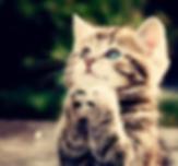 praying cat.png