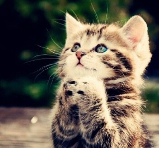 praying cat.png