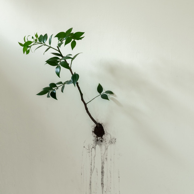 CHIH-SHENG LAI / A Tree Planted on the Wall