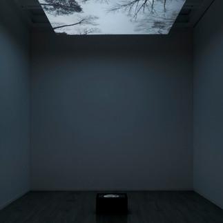 YOUKI HIRAKAWA2 / Vanished Tree