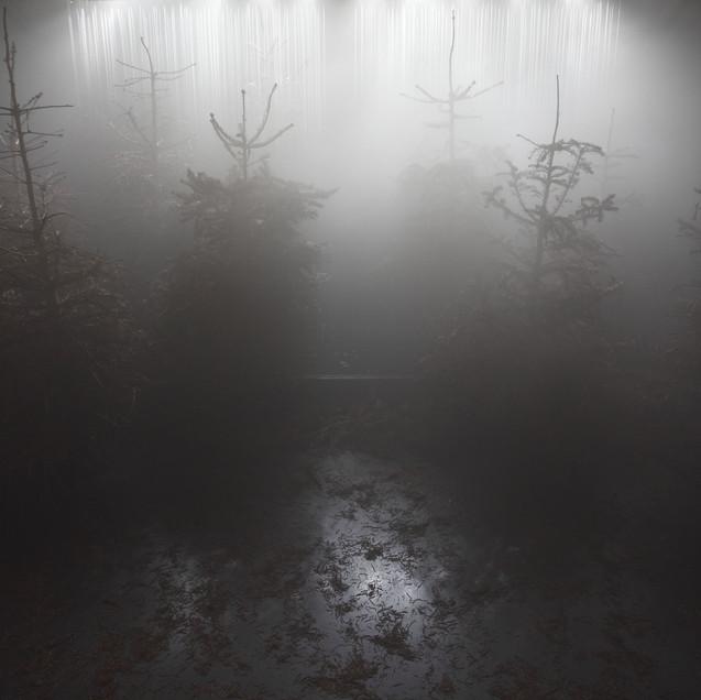GABRIEL LESTER / Loop Forest