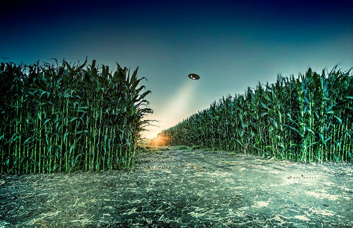 Corn fields secrets