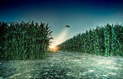 Corn fields secrets